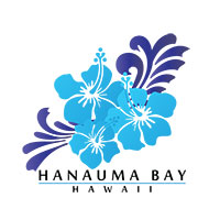 hawaii blue hibiscus flower